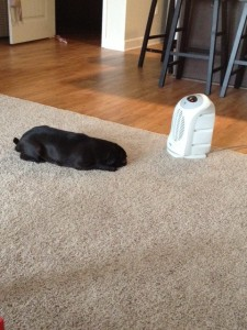 penny and the heater
